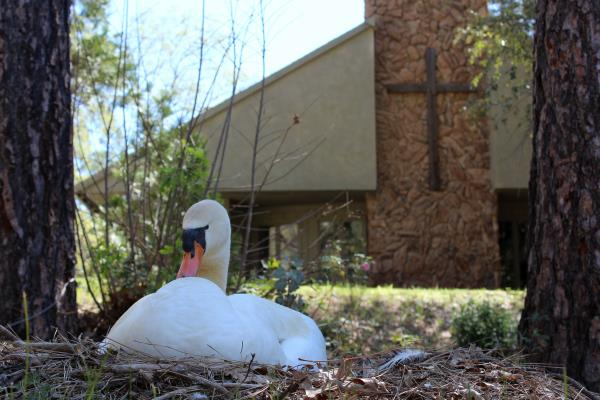 photo of a duck in front of Walters' Chapel